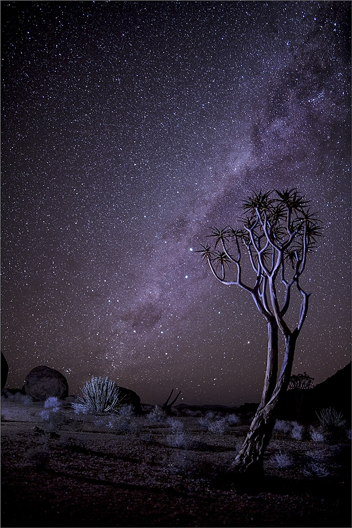 Long Exposure image of a quiver tree