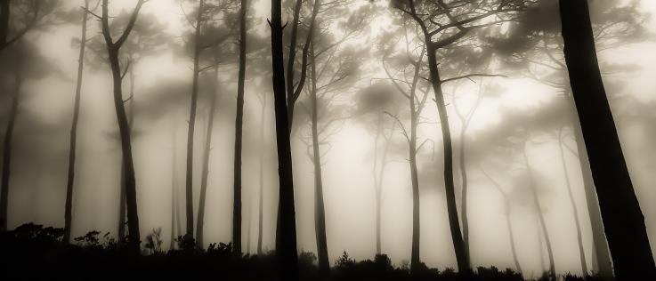 Luke Brouwers Trees in the mist
