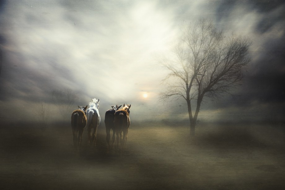 fine art conceptual composite of four horses running towards the sun