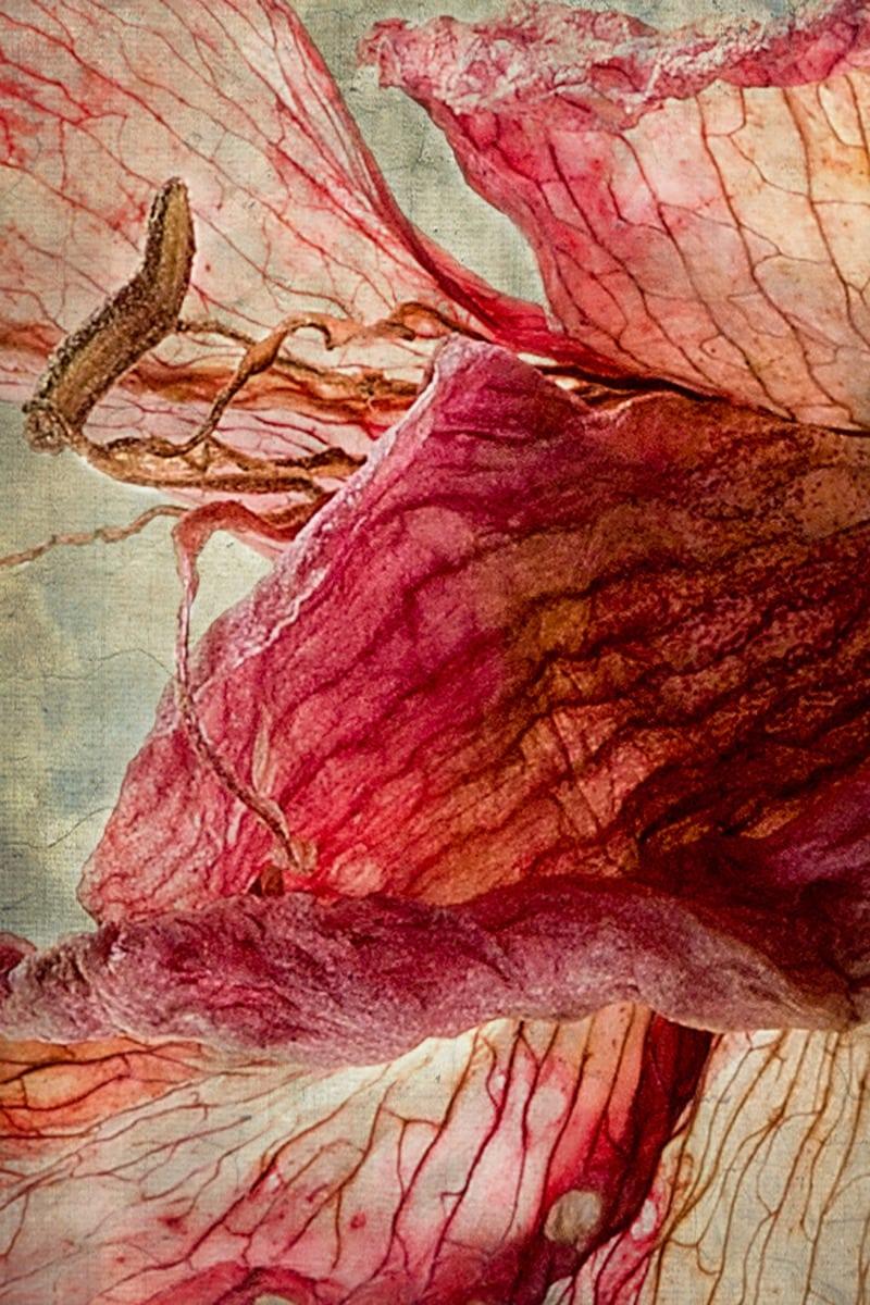 flower by susan van wyk